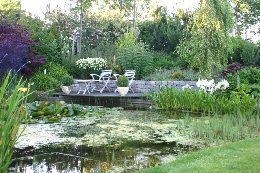 Natuurlijke vijver met weelderige oeverbeplanting in Honselersdijk