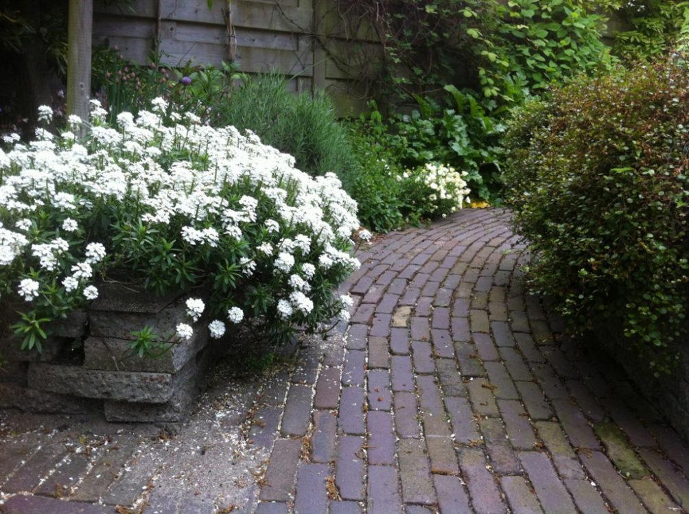 Een  lekker groen pad door een tuin in Den Hoorn