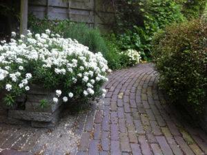 Tuinontwerp daktuin voorbeeld van Diemelgroenvoorzieningen in Den Hoorn (ZH)