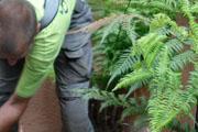 Tuinonderhoud door hovenier, hoveniersbedrijf Diemel Groenvoorzieningen