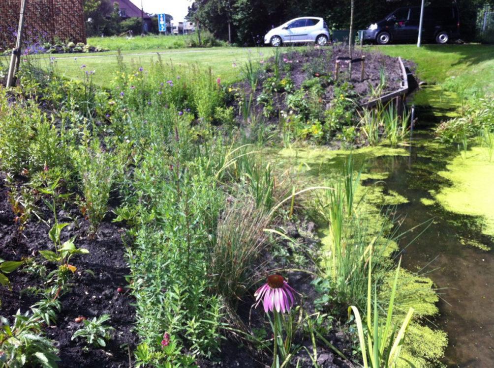 Natuur in ontwikkeling in een privé tuin in Honselersdijk