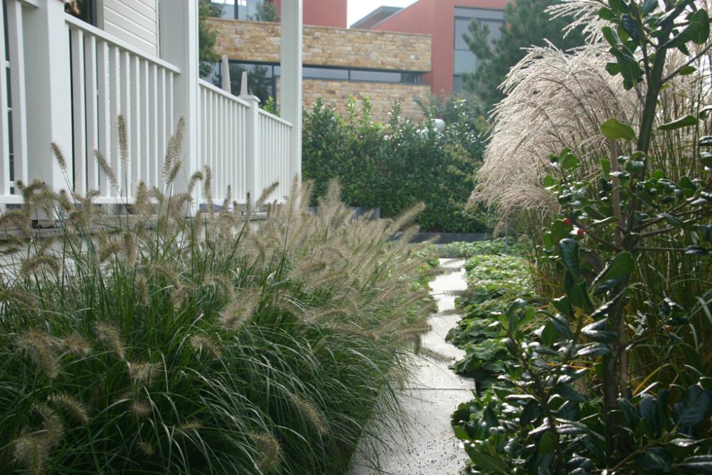 Pennysetum in vakbeplanting langs de veranda.